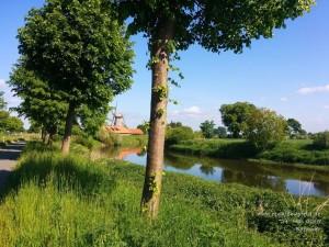 2015-05-24-Bothmer